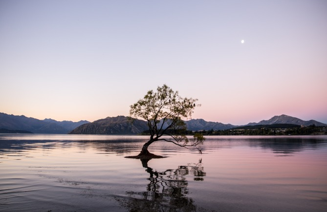 Lonely tree - Wanaka